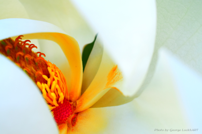 magnolia edit 2